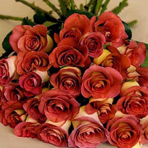 18 hot orange roses - Jordan Delivery Only